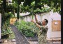 Bộ đội Việt Nam 'phủ xanh' đất cằn ở Nam Sudan
